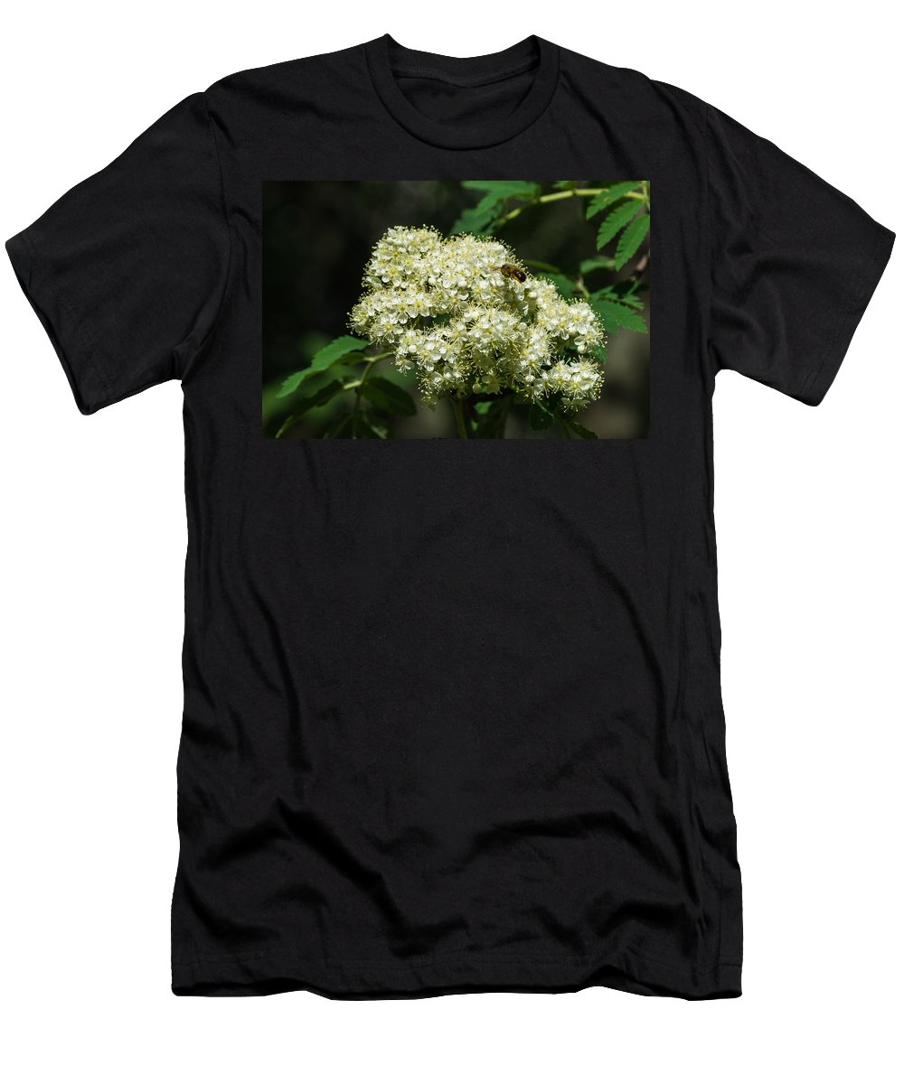 Animal Men's T-Shirt (Athletic Fit) featuring the photograph Bee Hovering Over Rowan Truss - Featured 3 by Alexander Senin
