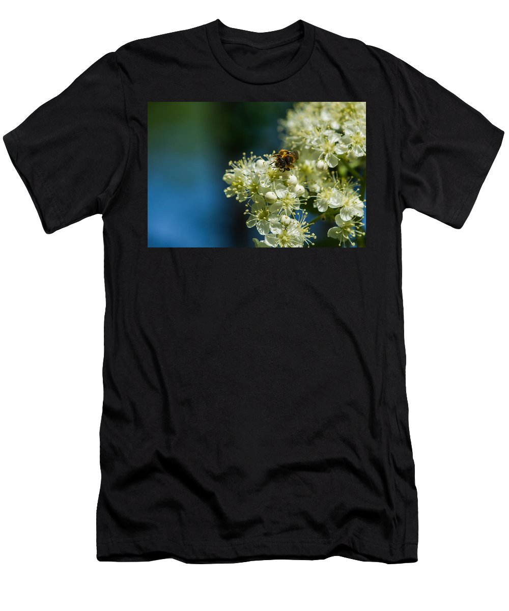Animal Men's T-Shirt (Athletic Fit) featuring the photograph Bee On A Rowan Flower - Featured 3 by Alexander Senin