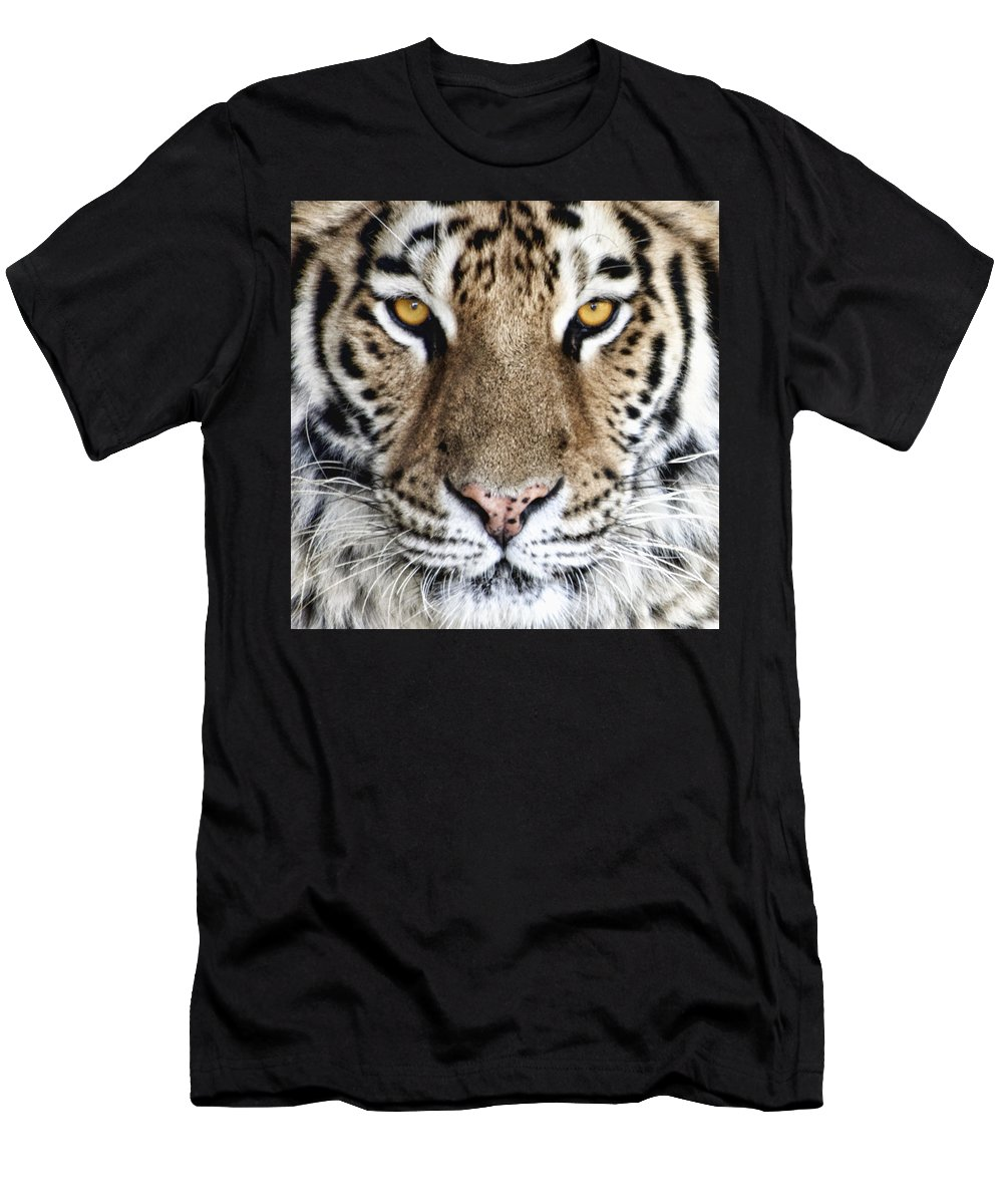 Tiger Men's T-Shirt (Athletic Fit) featuring the photograph Bengal Tiger Eyes by Tom Mc Nemar