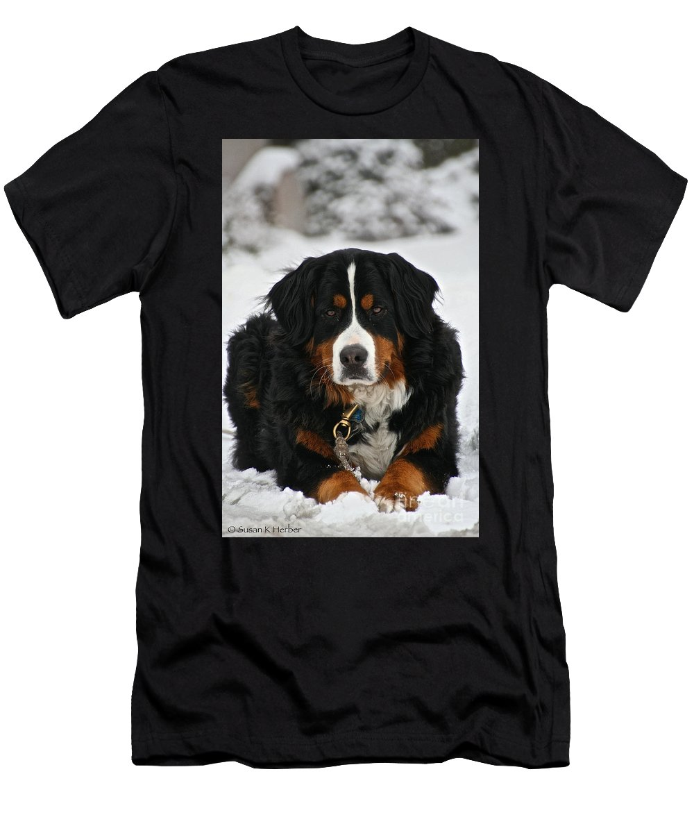 Outdoors Men's T-Shirt (Athletic Fit) featuring the photograph Bernese Mountain Dog by Susan Herber