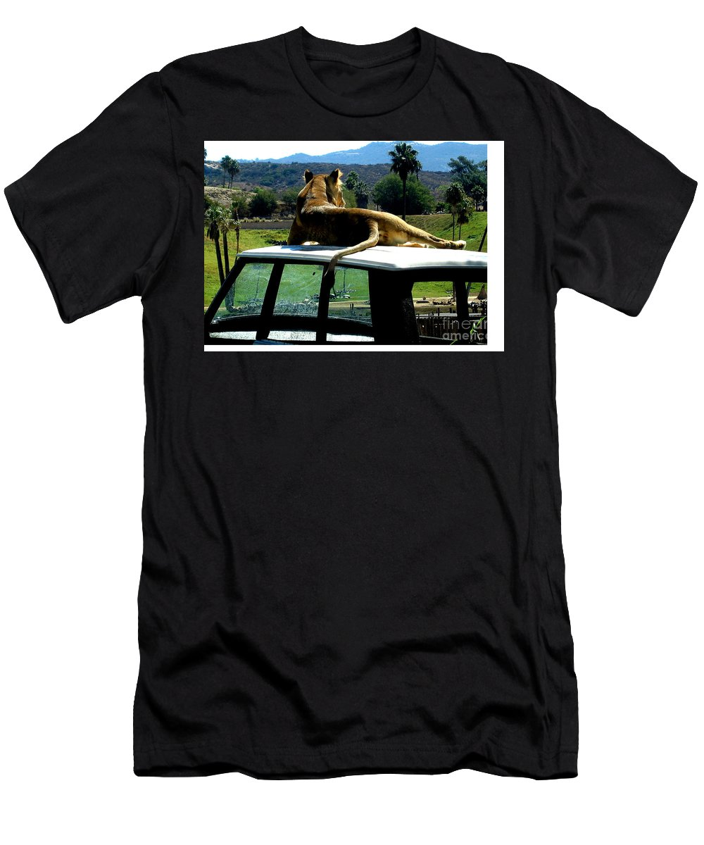 Lion Men's T-Shirt (Athletic Fit) featuring the photograph Big Cat Just Resting by Jay Milo