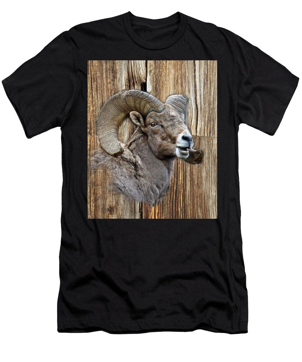 Wildlife Men's T-Shirt (Athletic Fit) featuring the photograph Bighorn Sheep Barnwood by Steve McKinzie