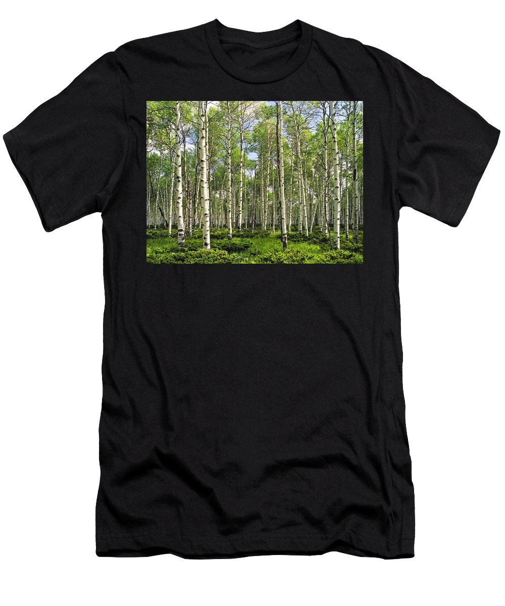 Forest Men's T-Shirt (Athletic Fit) featuring the photograph Birch Tree Grove In Summer by Randall Nyhof