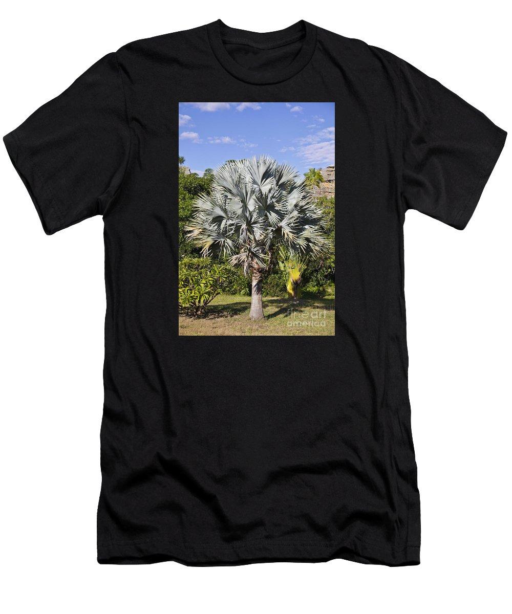 Bismarck Palm Men's T-Shirt (Athletic Fit) featuring the photograph Bismarck Palm Bismarckia Nobilis by Liz Leyden