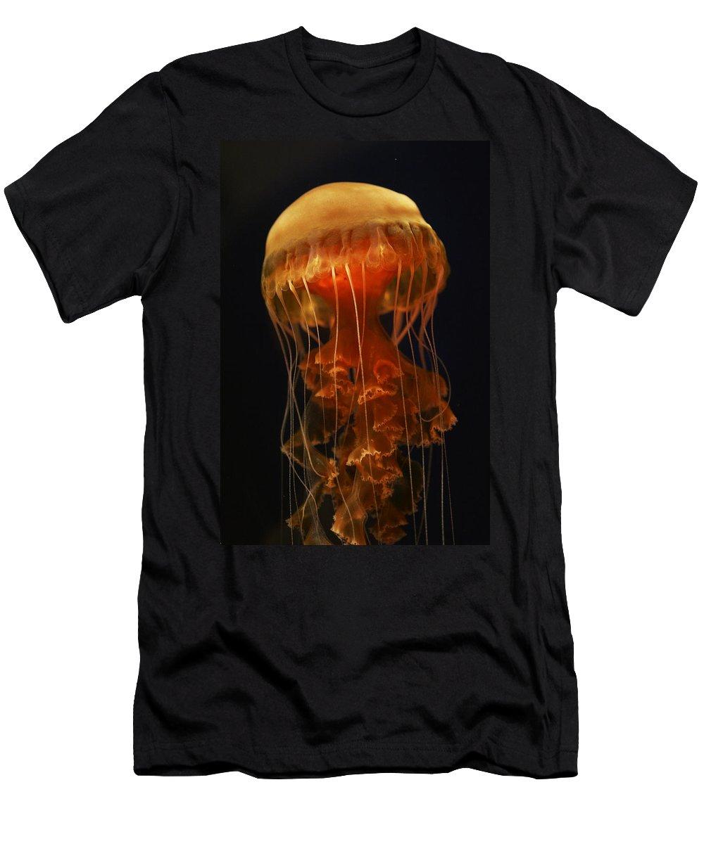 Feb0514 Men's T-Shirt (Athletic Fit) featuring the photograph Black Sea Nettle by Hiroya Minakuchi