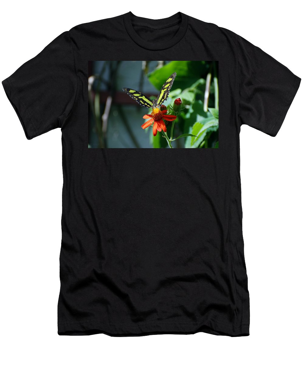 Lepidopterology Men's T-Shirt (Athletic Fit) featuring the photograph Blooms And Butterfly1 by Rob Hans