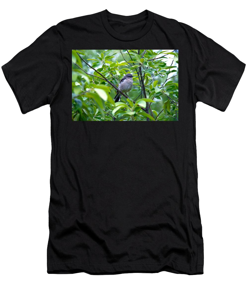 Blue-gray Gnatchatcher Men's T-Shirt (Athletic Fit) featuring the photograph Blue-gray Gnatcatcher by M E Wood