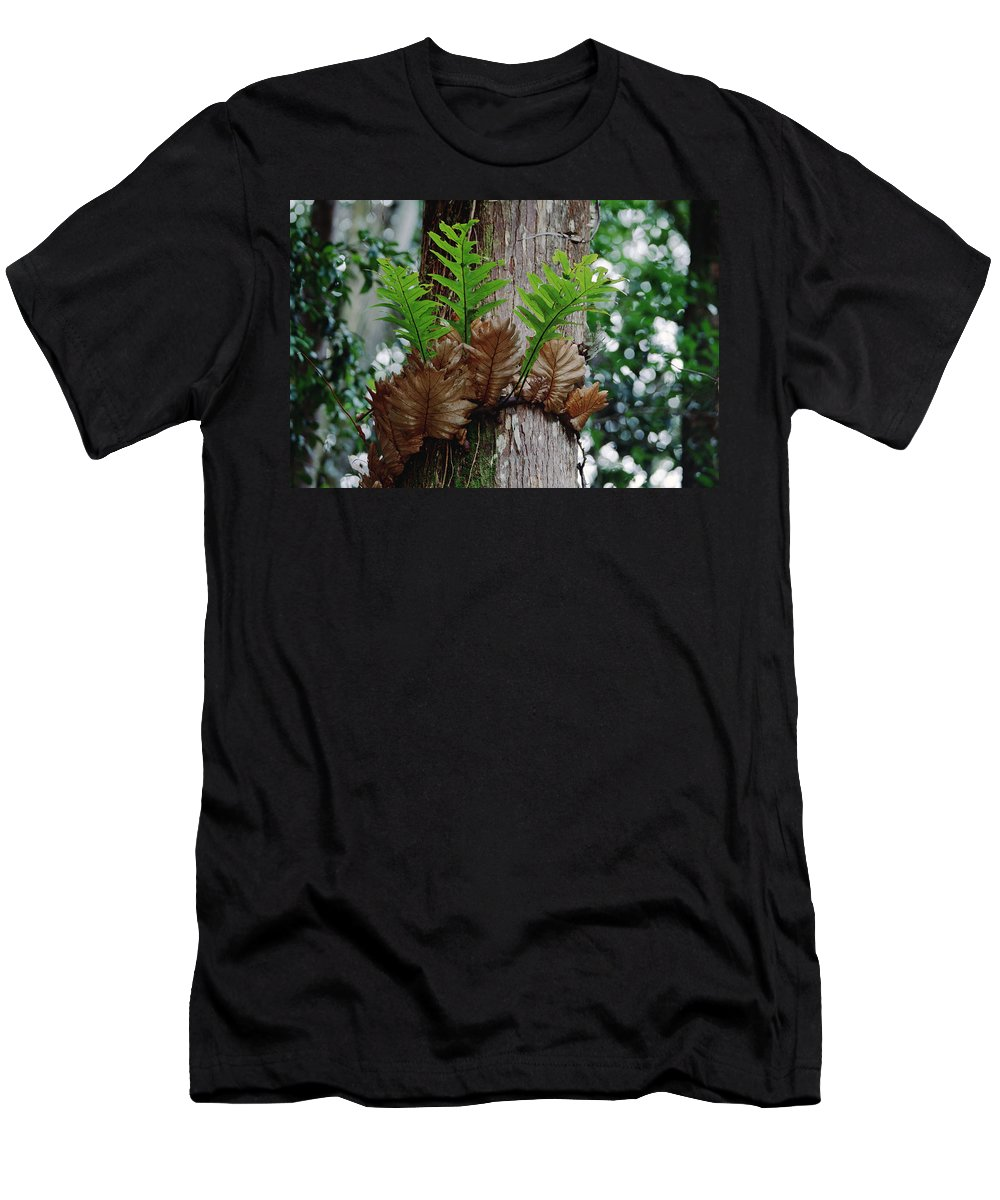 Feb0514 Men's T-Shirt (Athletic Fit) featuring the photograph Borneo Fern A Primitve Ant Plant by Mark Moffett