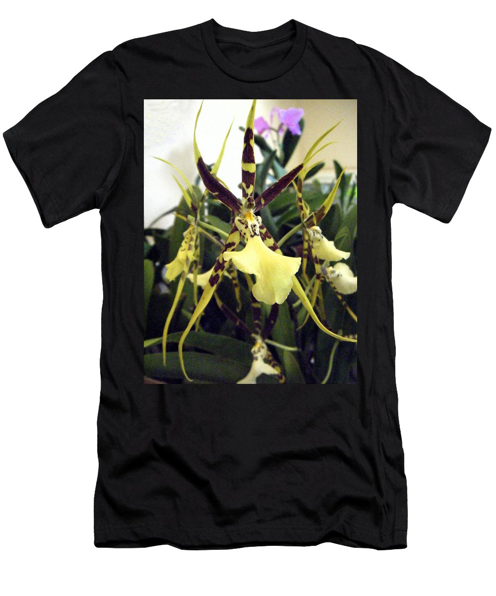Brassia Rex Orchid T-Shirt for Sale by Nancy