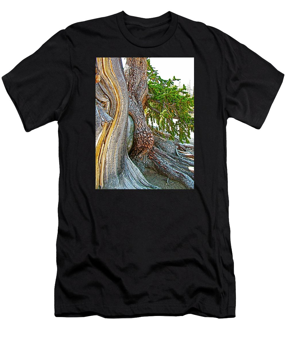 Bristlecone Pine On Ramparts Trail In Cedar Breaks National Monument Men's T-Shirt (Athletic Fit) featuring the photograph Bristlecone Pine On Ramparts Trail In Cedar Breaks National Monument-utah by Ruth Hager