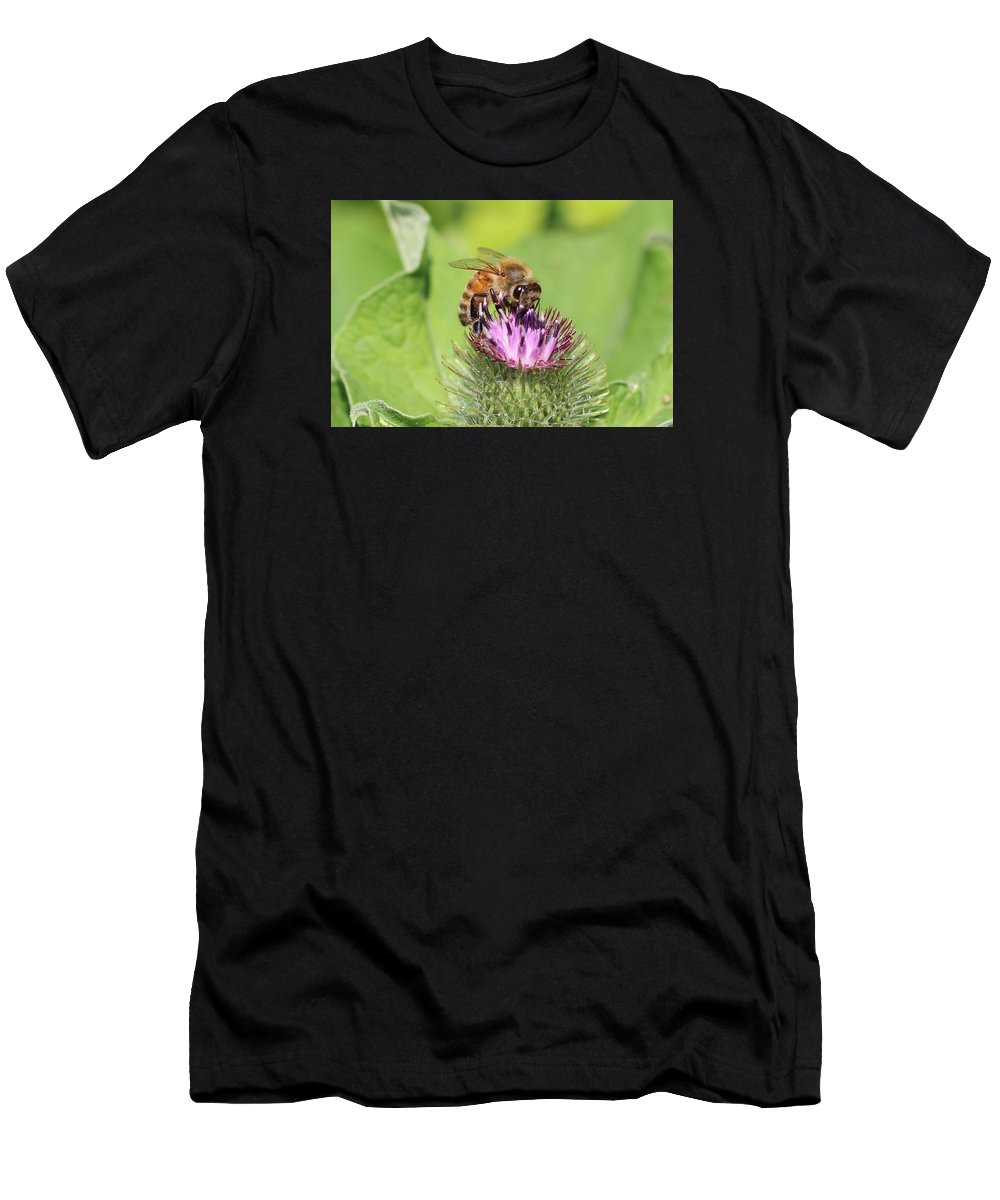 Honeybee Men's T-Shirt (Athletic Fit) featuring the photograph Burdock And Honeybee by Lucinda VanVleck