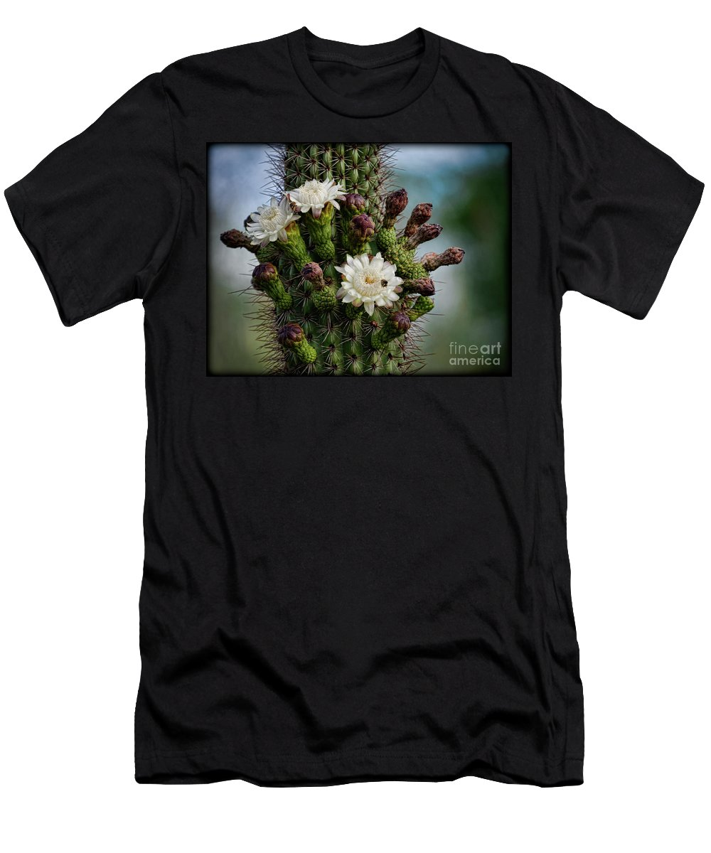 Organ Pipe Cactus Flowers Men's T-Shirt (Athletic Fit) featuring the photograph Cacti Bouquet by Saija Lehtonen