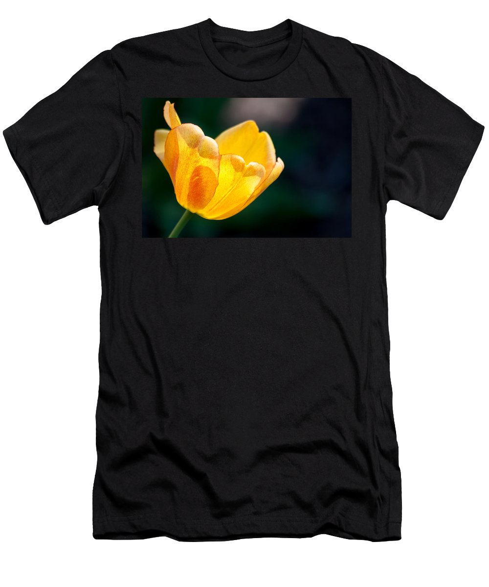 Tulip Men's T-Shirt (Athletic Fit) featuring the photograph Catching Rays by Lauri Novak