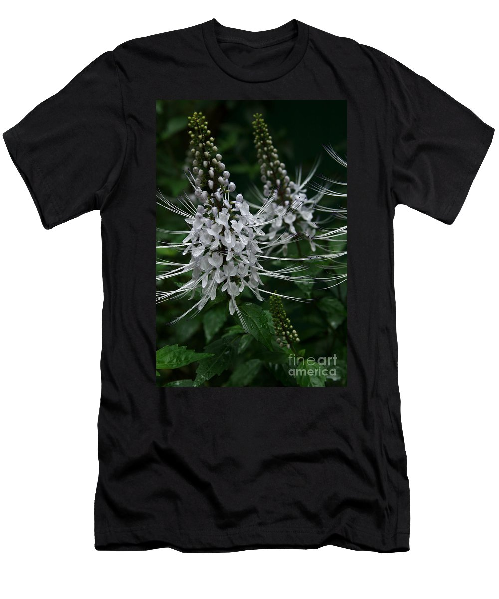 Cats Whiskers Men's T-Shirt (Athletic Fit) featuring the photograph Cats Whiskers Kitty Whiskers Java Tea Orthosiphon Aristatus Nahiku Rainforest Maui Hawaii by Sharon Mau