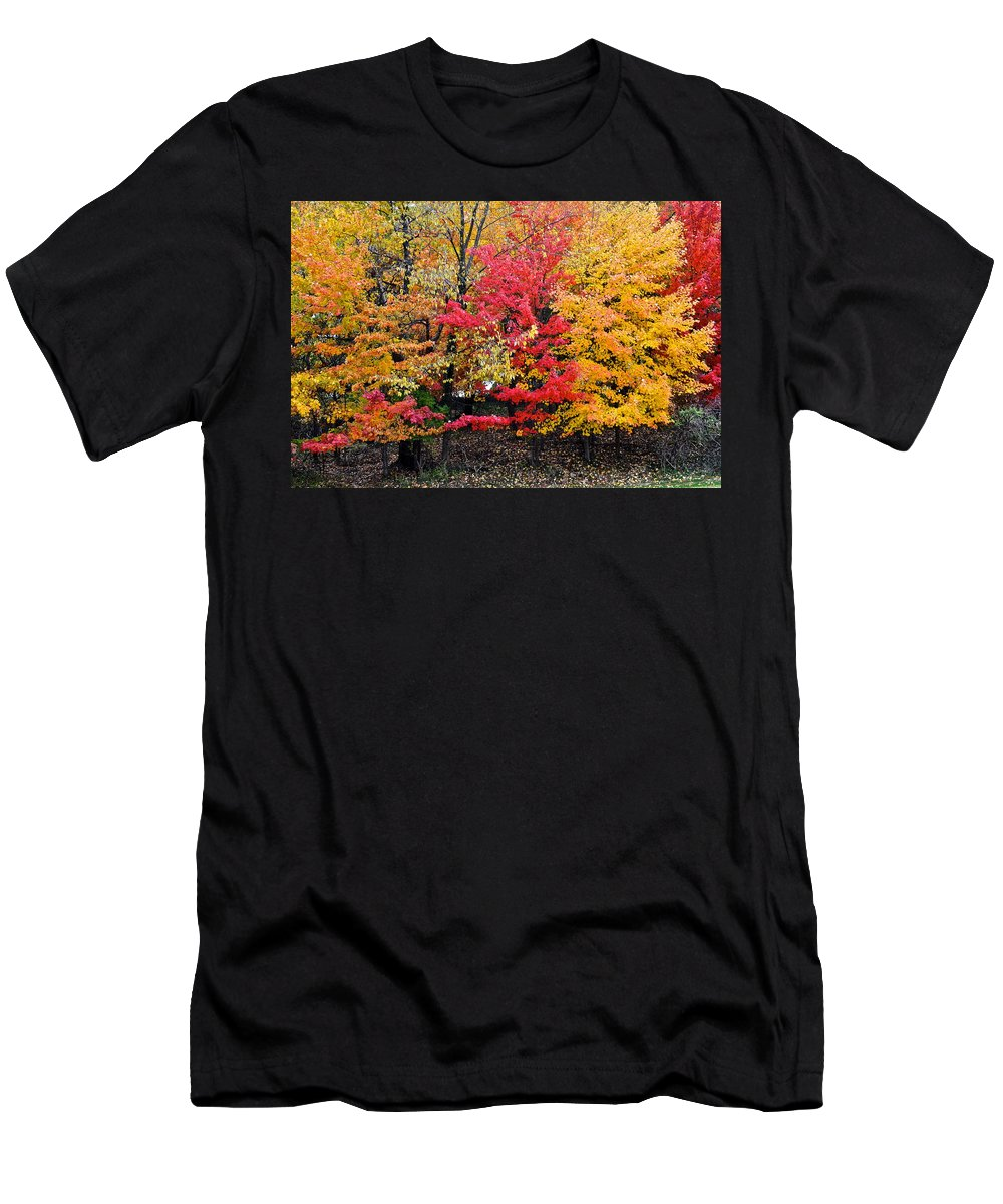 Landscape Men's T-Shirt (Athletic Fit) featuring the photograph Center Of Attention by Frozen in Time Fine Art Photography