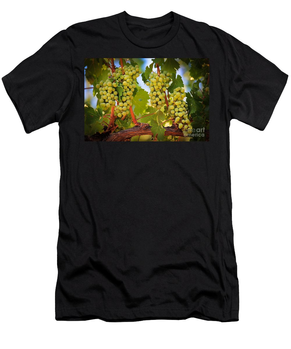 America Men's T-Shirt (Athletic Fit) featuring the photograph Chelan Grapevines by Inge Johnsson