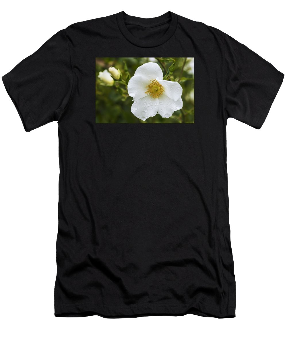Rose Men's T-Shirt (Athletic Fit) featuring the photograph Cherokee Rose With Rain Drops by Vishwanath Bhat