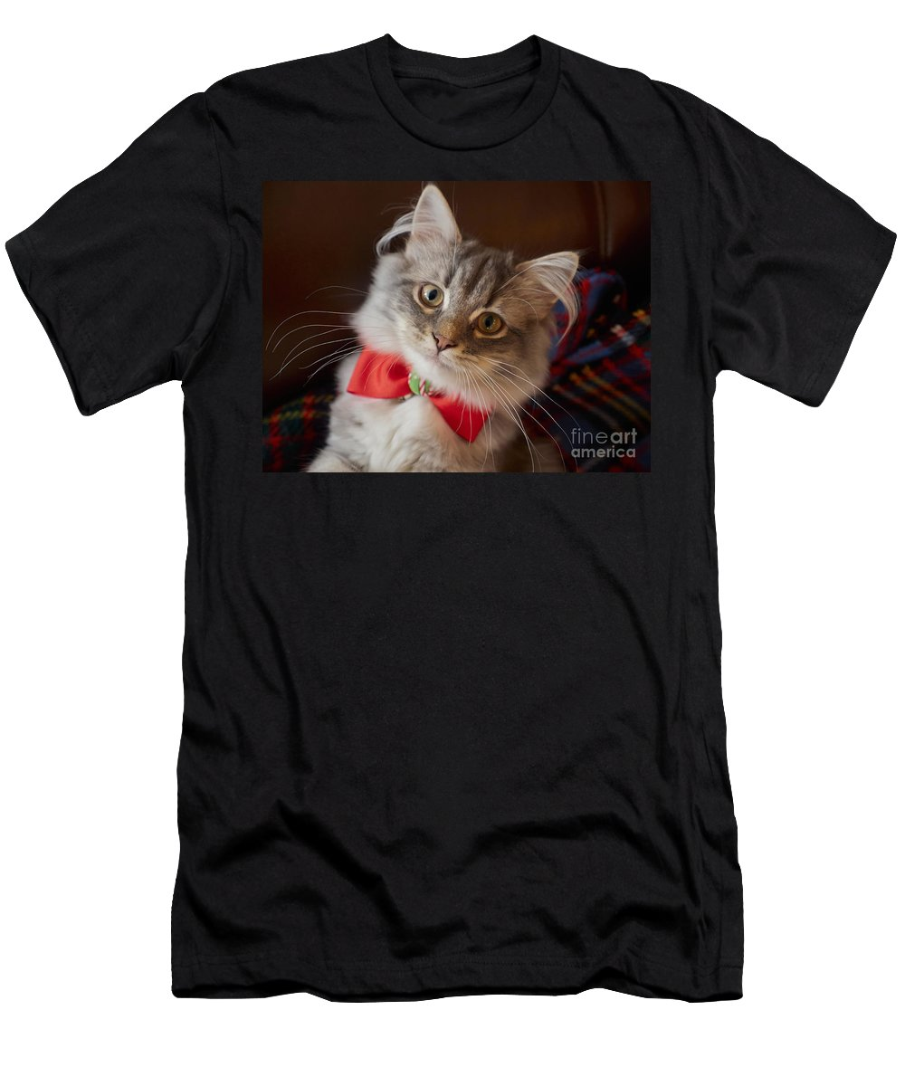 Kitten Men's T-Shirt (Athletic Fit) featuring the photograph Christmas Kitten by Louise Heusinkveld