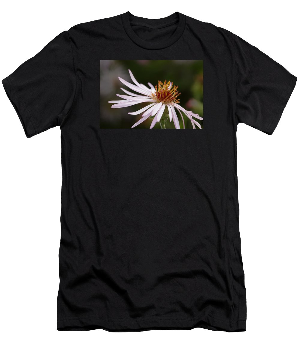 Climbing Aster Men's T-Shirt (Athletic Fit) featuring the photograph Climbing Aster by Paul Rebmann