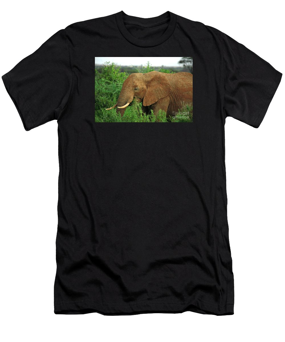 Africa Men's T-Shirt (Athletic Fit) featuring the photograph Close Up Of African Elephant by Deborah Benbrook