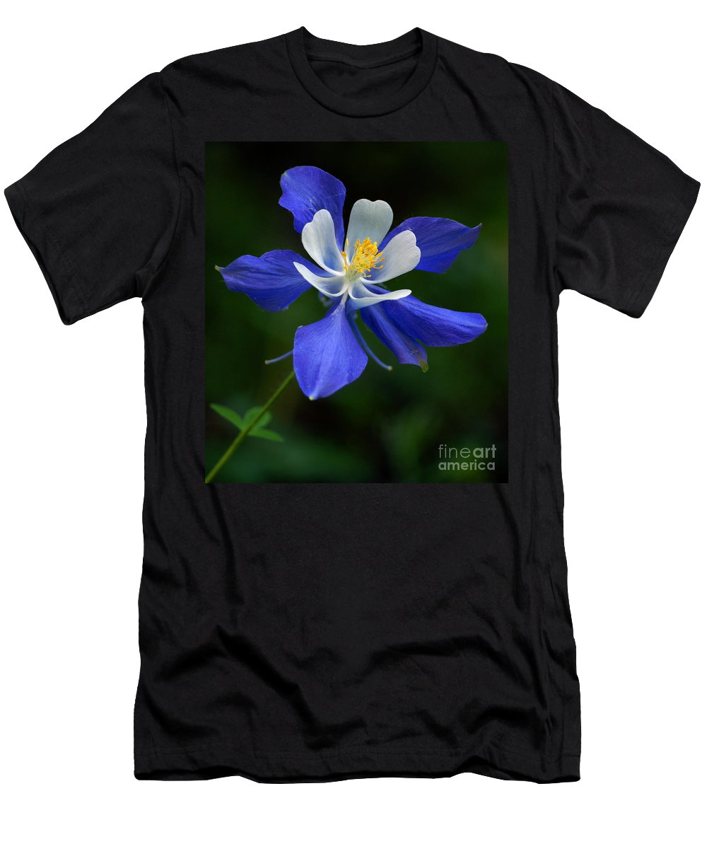 Colorado blue columbine t shirt for sale by kelly black aquilegia coerulea mens t shirt athletic fit featuring the photograph colorado blue columbine izmirmasajfo