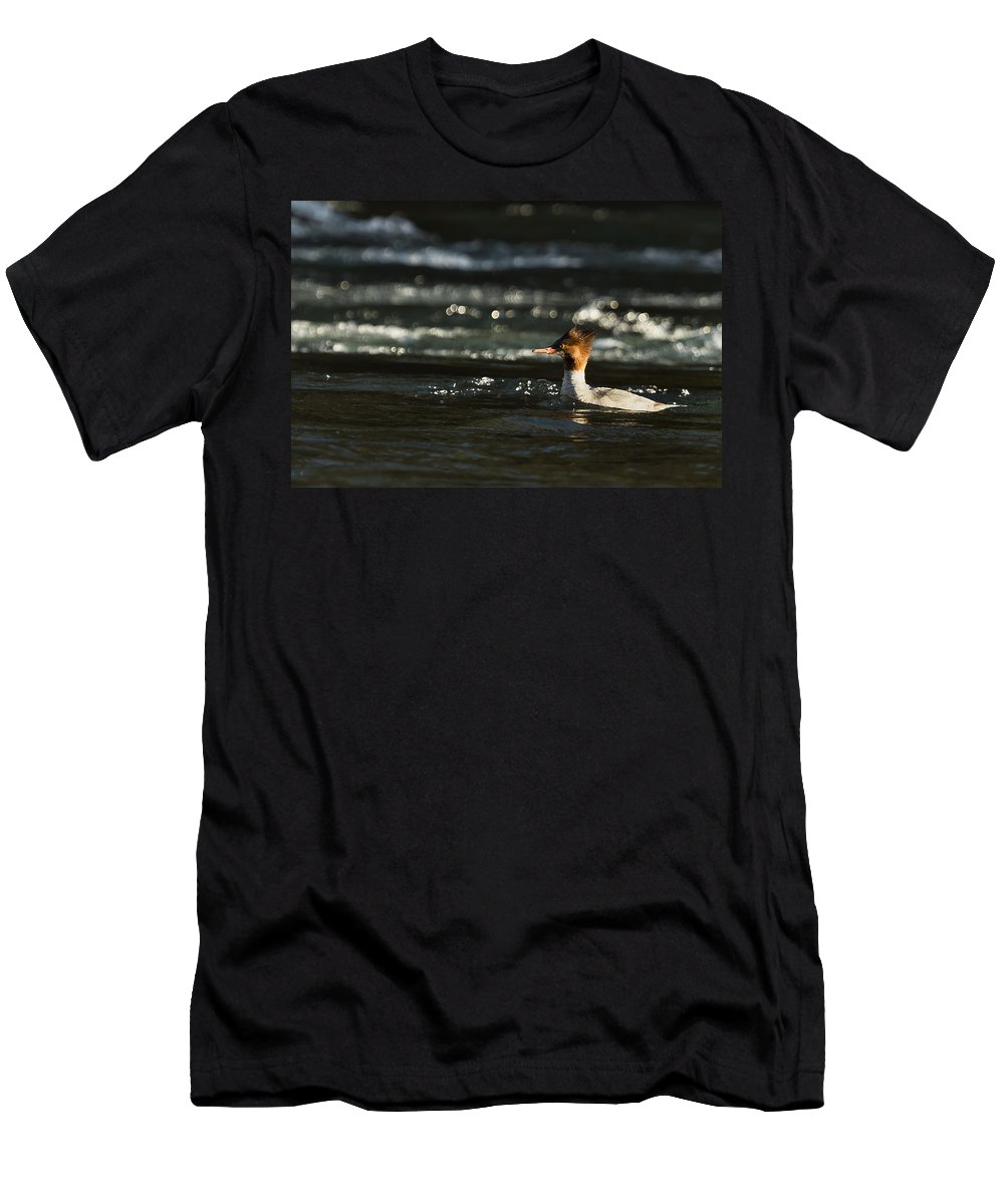 Common Merganser Men's T-Shirt (Athletic Fit) featuring the photograph Common Merganser by Belinda Greb