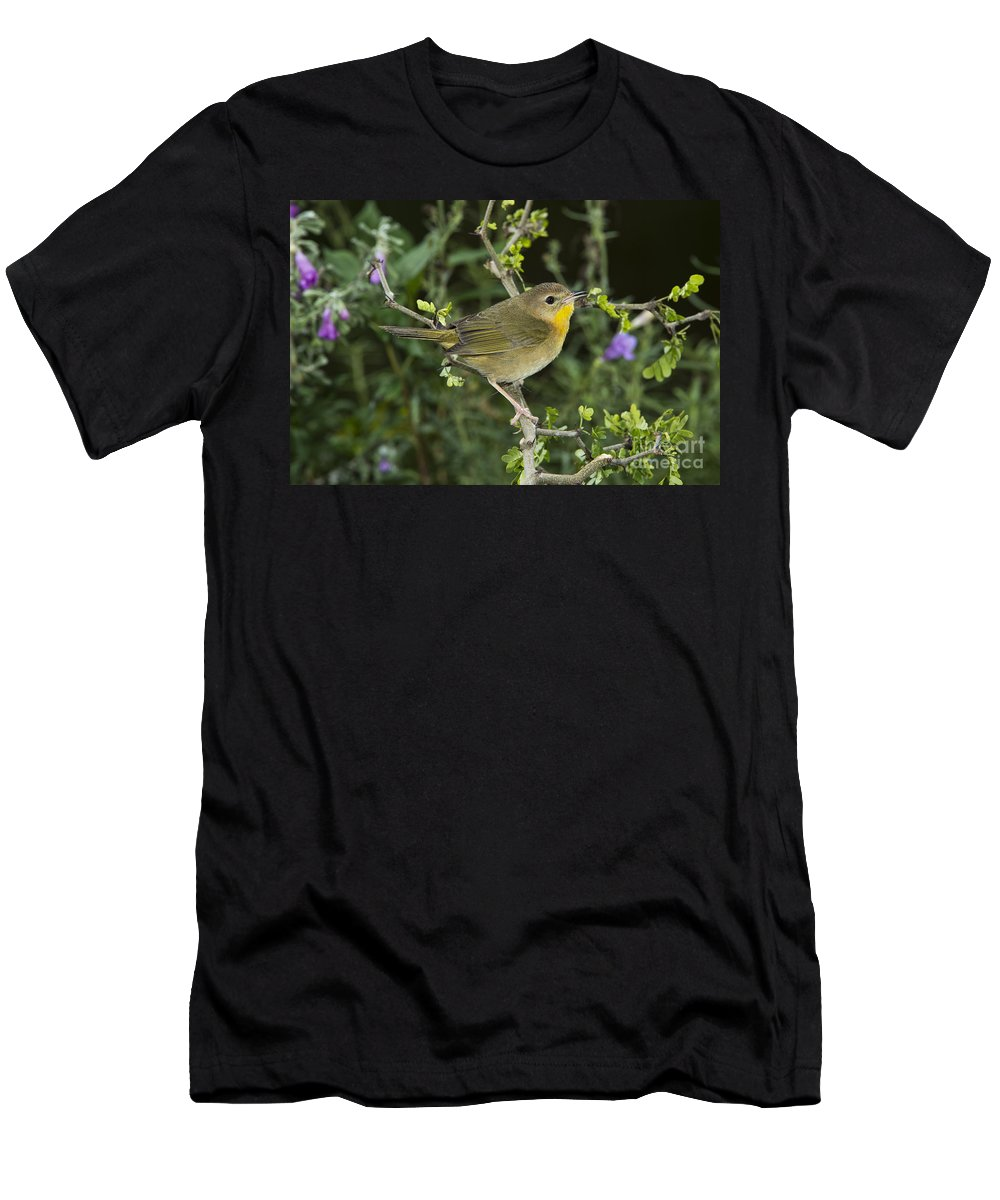 Common Yellowthroat Men's T-Shirt (Athletic Fit) featuring the photograph Common Yellowthroat Hen by Anthony Mercieca