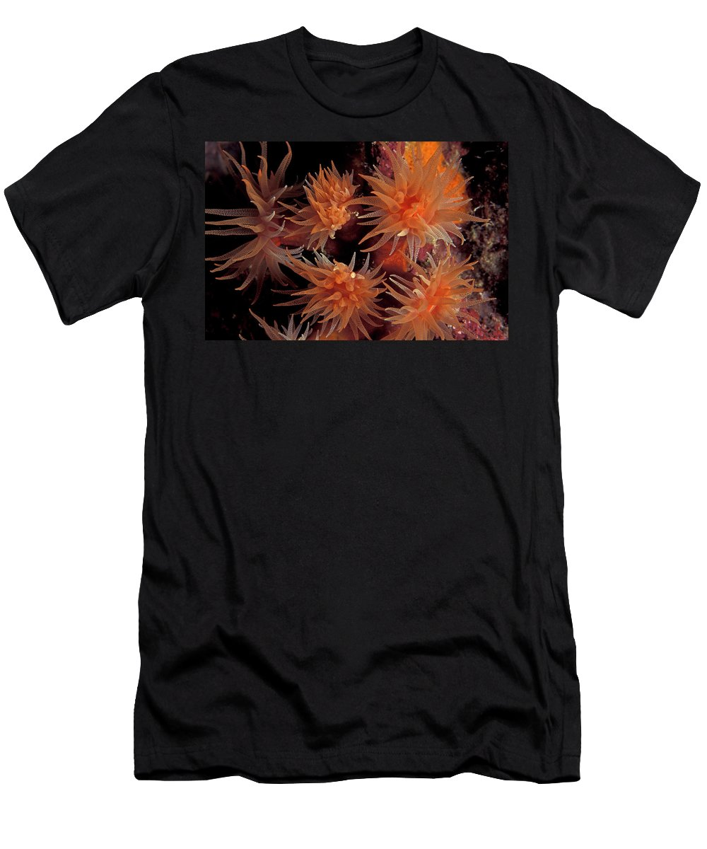 Abstract Men's T-Shirt (Athletic Fit) featuring the photograph Corals, Tubastraea Sp. Underwaterpapua by Jurgen Freund