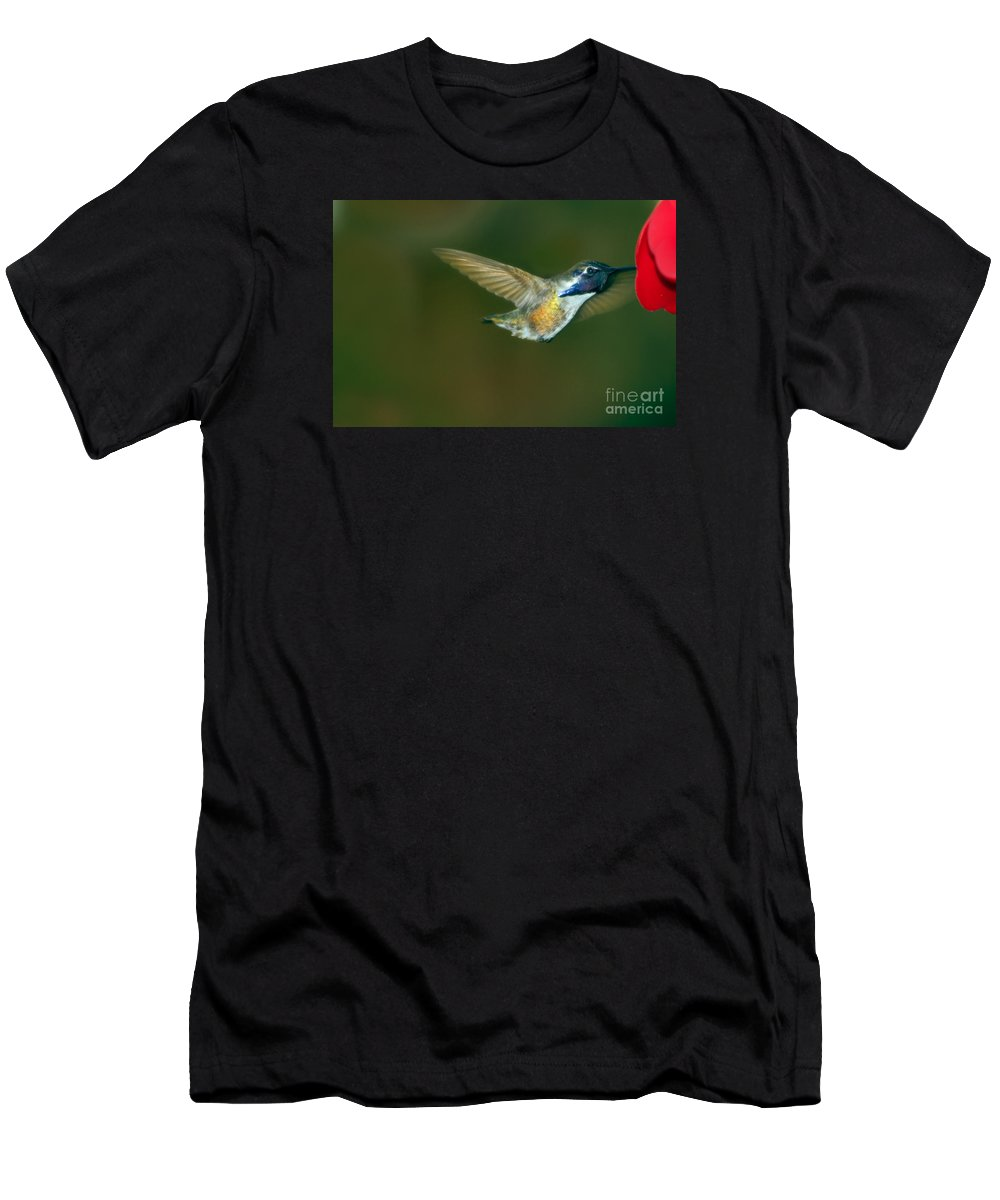 Birds Men's T-Shirt (Athletic Fit) featuring the photograph Costa's Hummingbird Feeding by Robert Bales