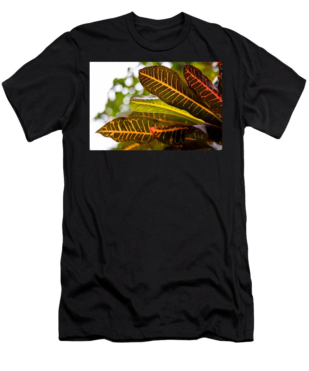 Branch Men's T-Shirt (Athletic Fit) featuring the photograph Croton by Gaurav Singh