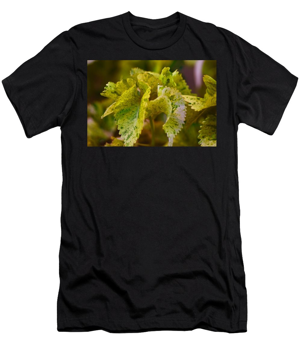 Longwood Gardens Men's T-Shirt (Athletic Fit) featuring the photograph Curly by Samantha Eisenhauer