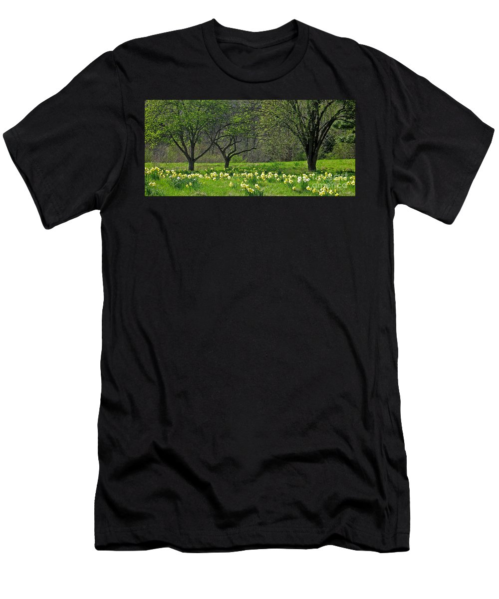 Spring Men's T-Shirt (Athletic Fit) featuring the photograph Daffodil Meadow by Ann Horn