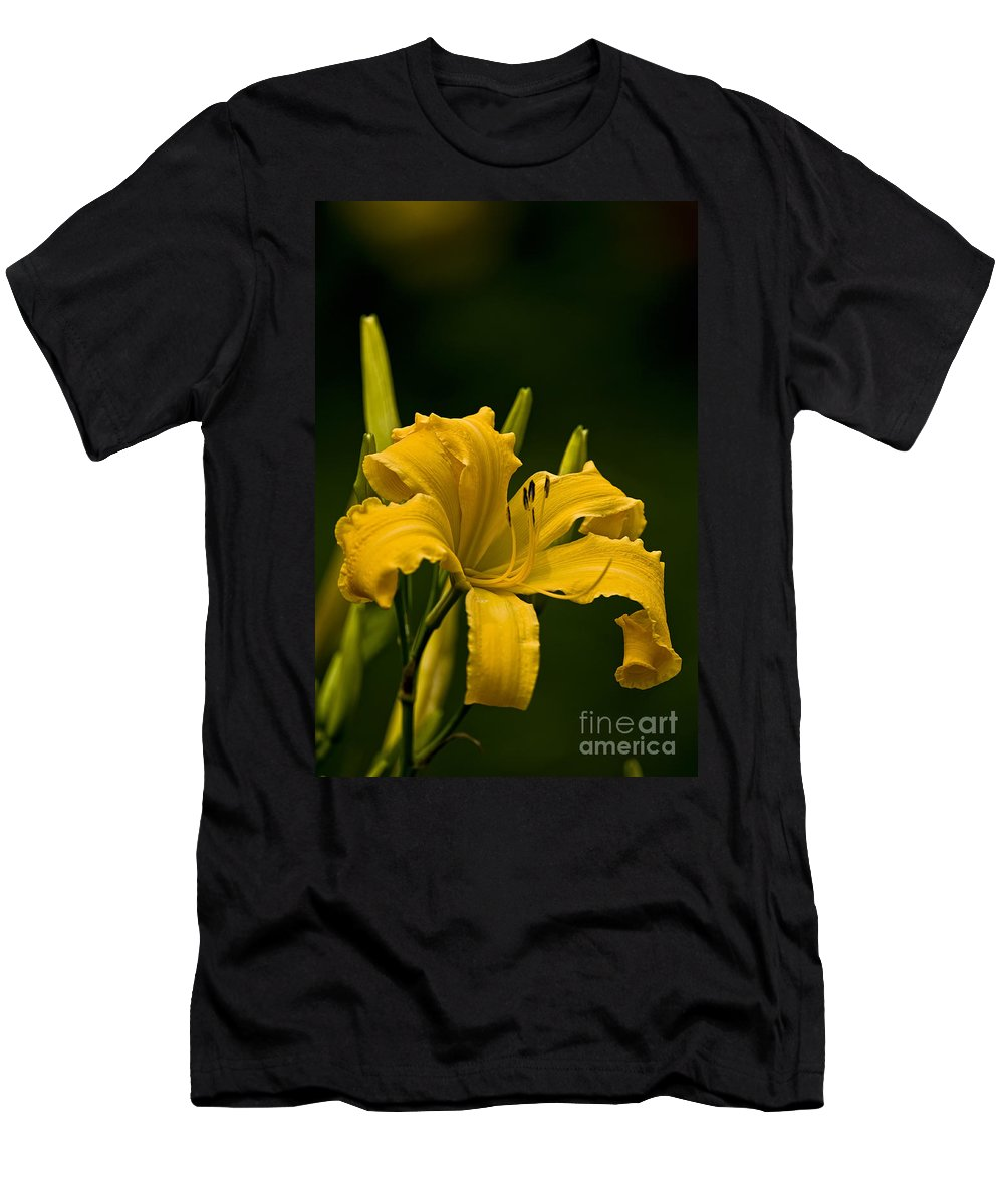 Daylily Men's T-Shirt (Athletic Fit) featuring the photograph Daylily Picture 539 by World Wildlife Photography
