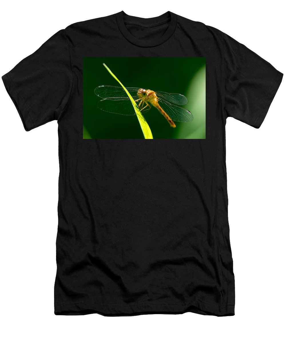 Insect Men's T-Shirt (Athletic Fit) featuring the photograph Dragon Fly On Grass by Richard Kitchen
