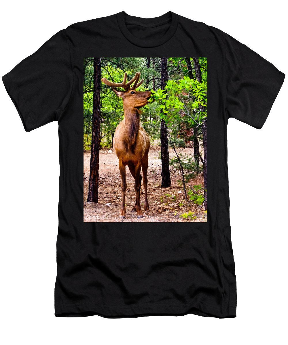 Animal Men's T-Shirt (Athletic Fit) featuring the photograph Elk - Mather Grand Canyon by Bob and Nadine Johnston