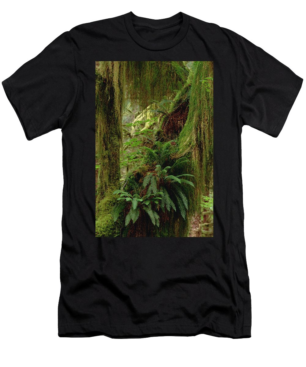 Feb0514 Men's T-Shirt (Athletic Fit) featuring the photograph Epiphytic Sword Fern by Gerry Ellis