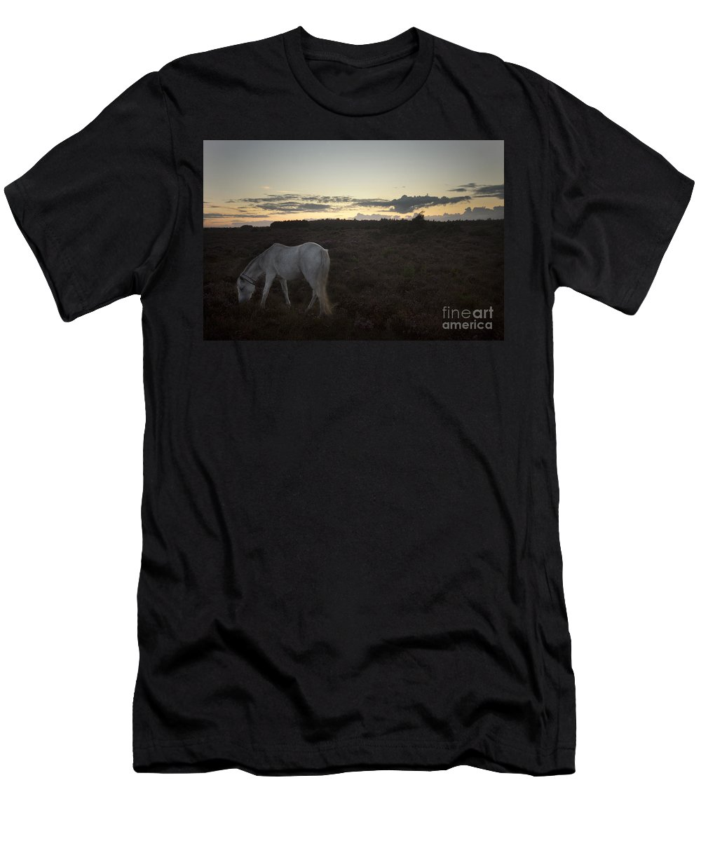 New Forest Men's T-Shirt (Athletic Fit) featuring the photograph Evening In New Forest by Angel Ciesniarska