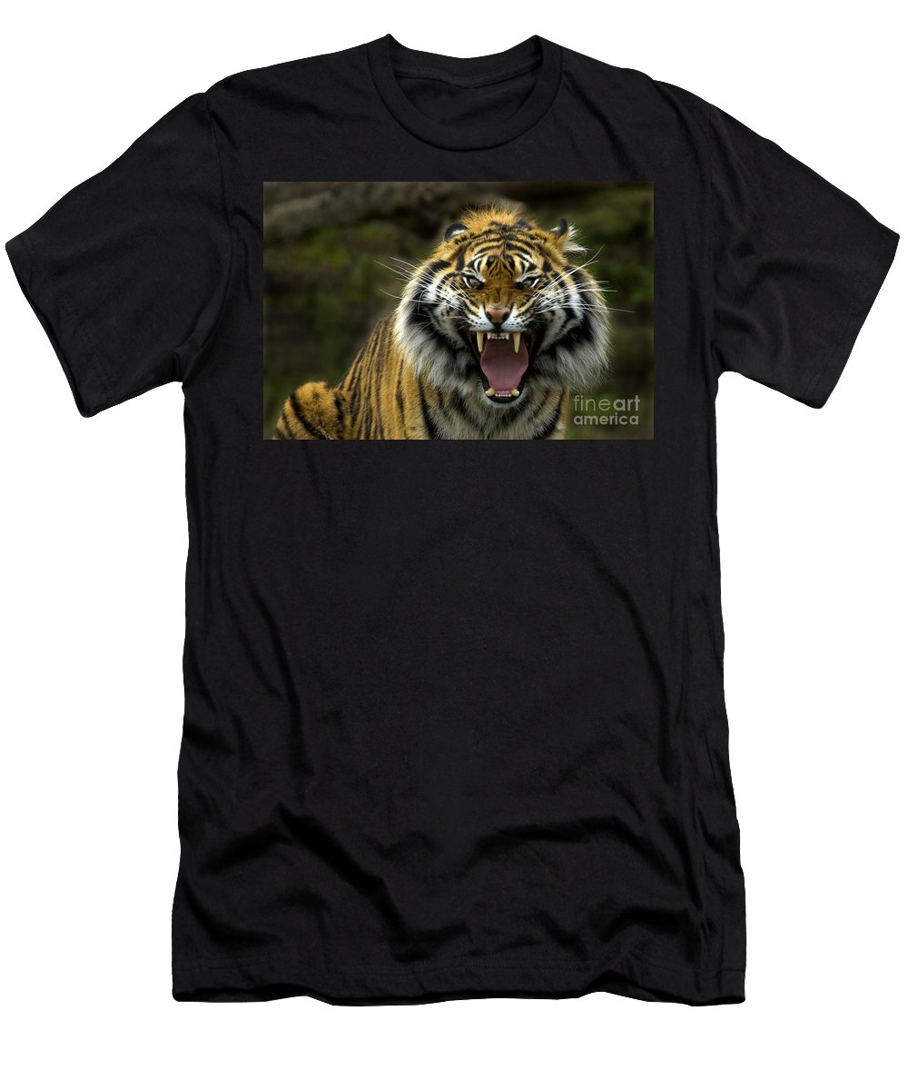 Tiger Men's T-Shirt (Athletic Fit) featuring the photograph Eyes Of The Tiger by Mike Dawson