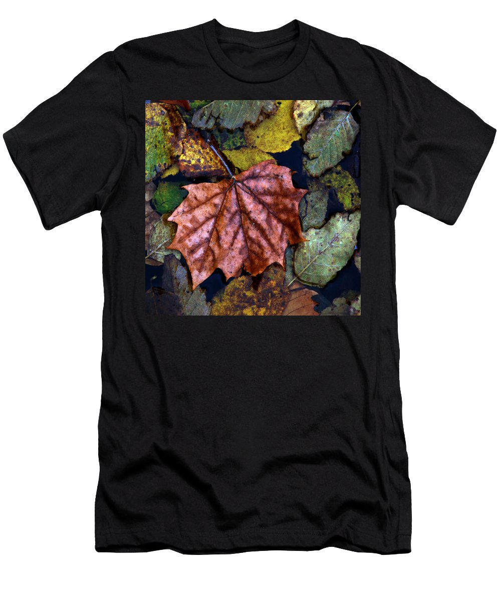 Fall Men's T-Shirt (Athletic Fit) featuring the photograph Fall Leaves 3 by Skip Willits