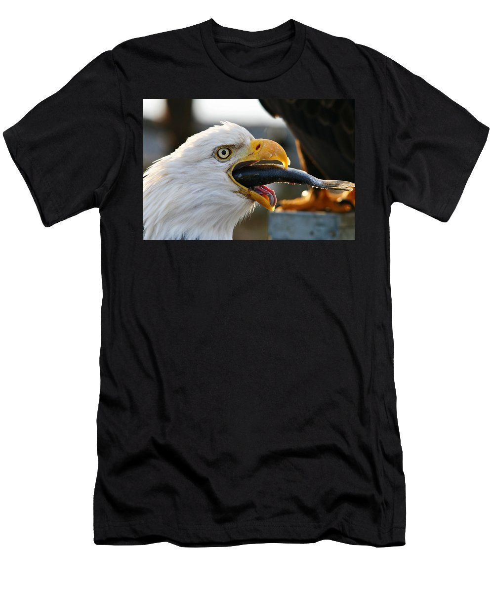 Eagle Men's T-Shirt (Athletic Fit) featuring the photograph Fish Dinner by Karen Jones