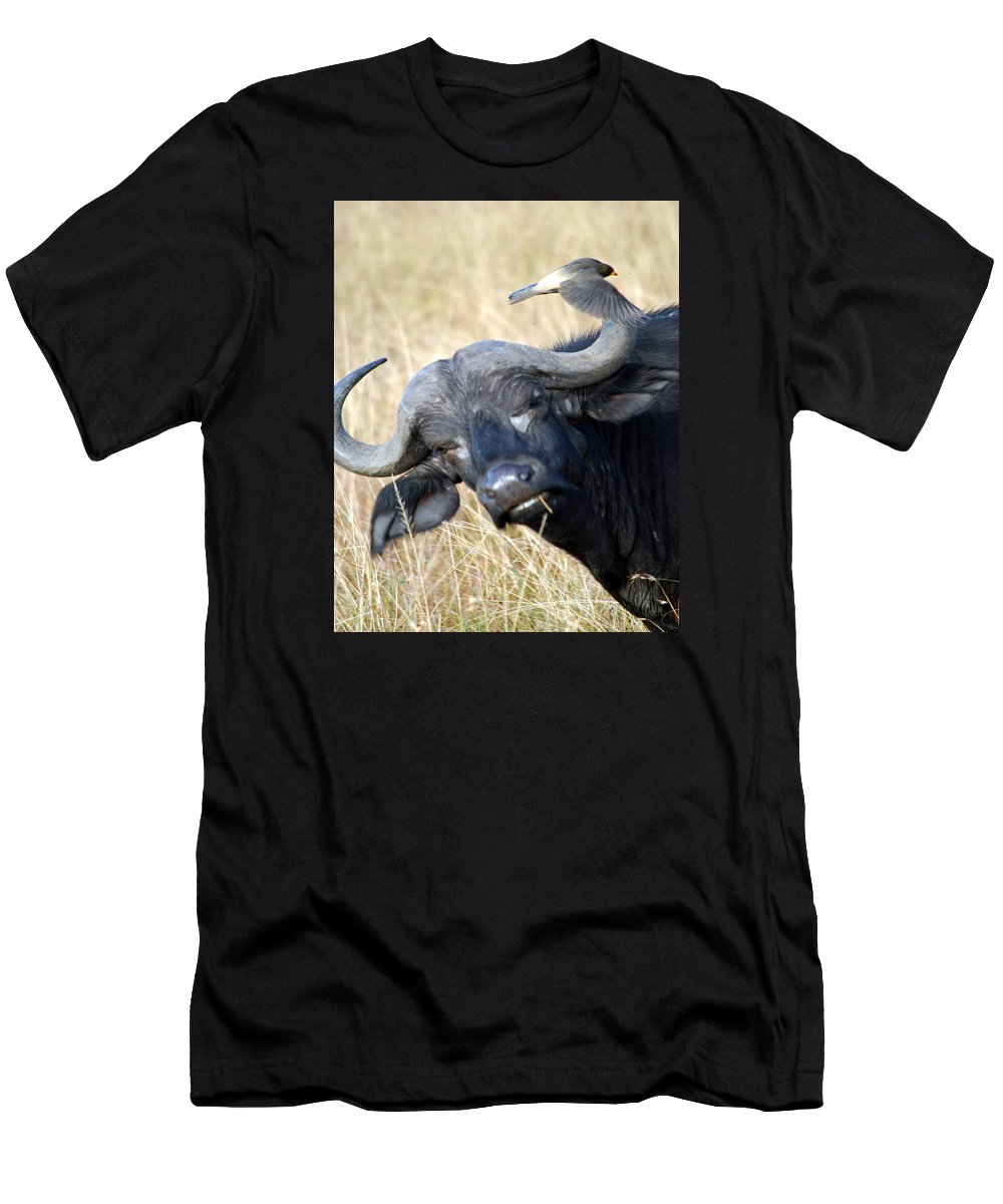 Buffalo Men's T-Shirt (Athletic Fit) featuring the photograph Flicking The Bird by Pamela Peters