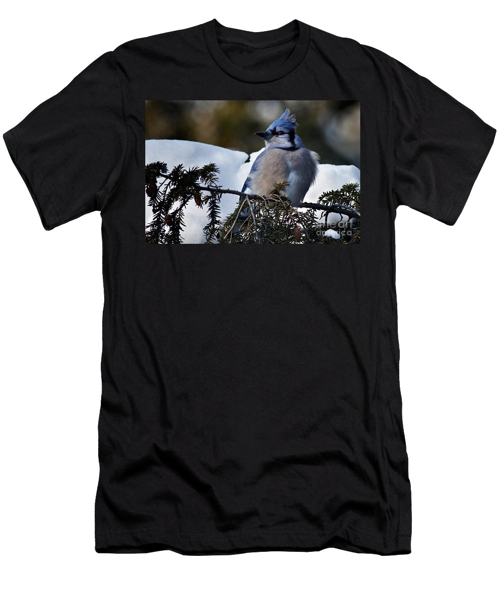 Blue Jay Men's T-Shirt (Athletic Fit) featuring the photograph Fluffy Blue Jay by Rick Mousseau