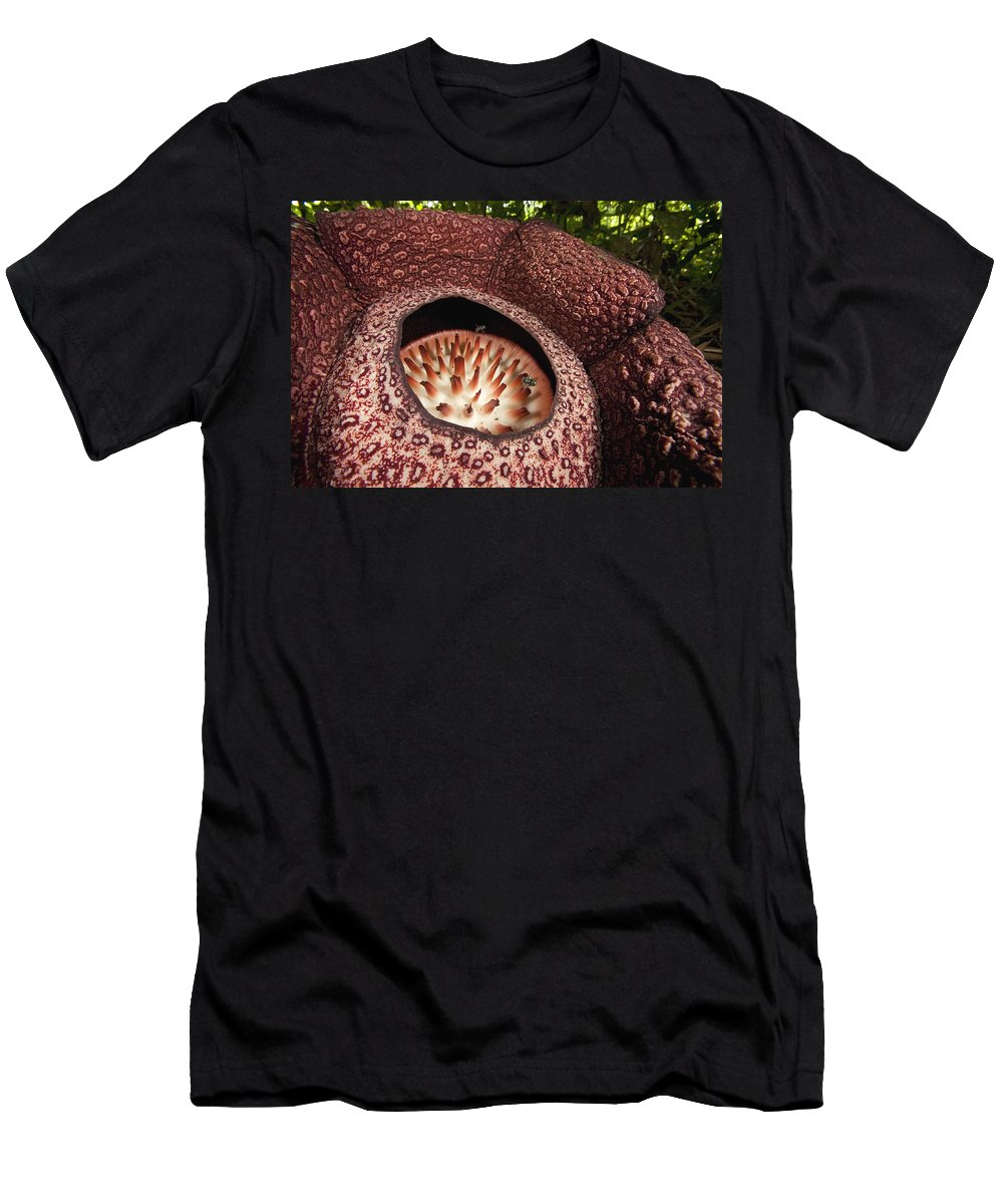 Feb0514 Men's T-Shirt (Athletic Fit) featuring the photograph Fly Pollinating Rafflesia Sabah Borneo by Christian Ziegler