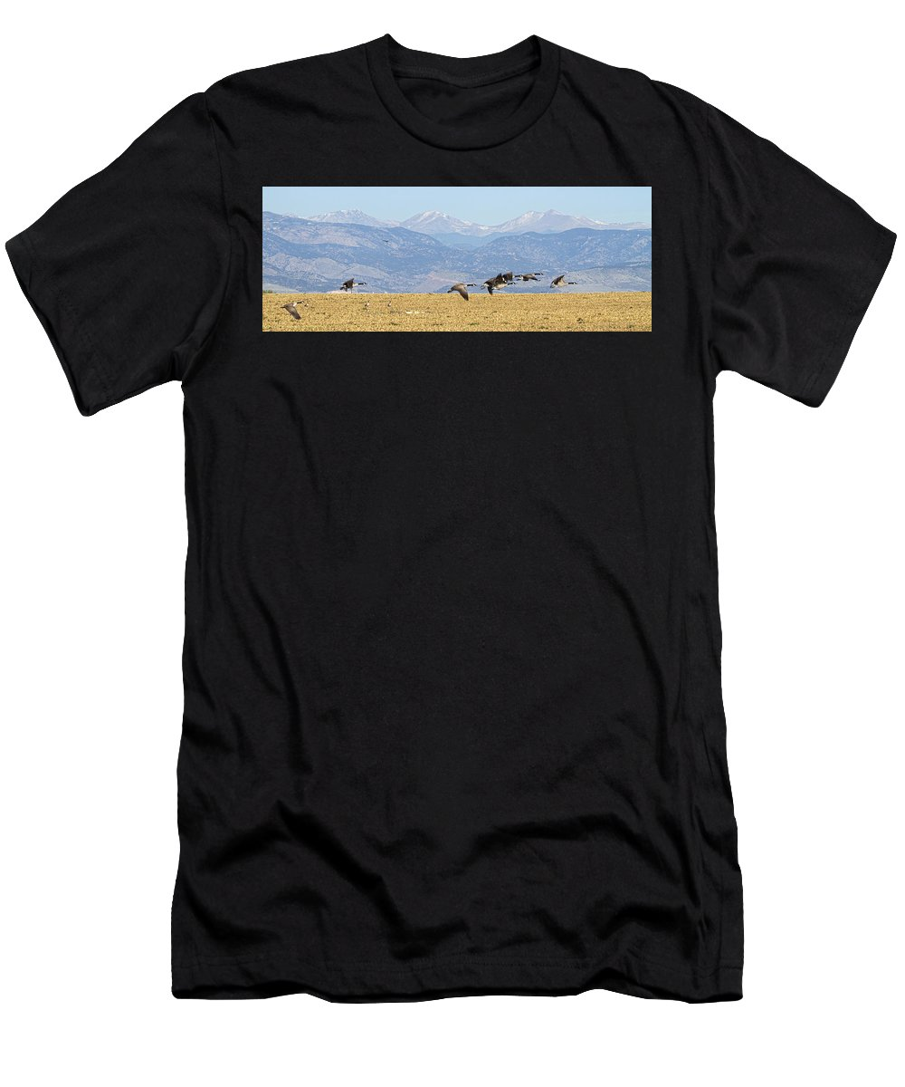 Cackling Goose Men's T-Shirt (Athletic Fit) featuring the photograph Flying Canadian Geese Rocky Mountains Panorama 2 by James BO Insogna
