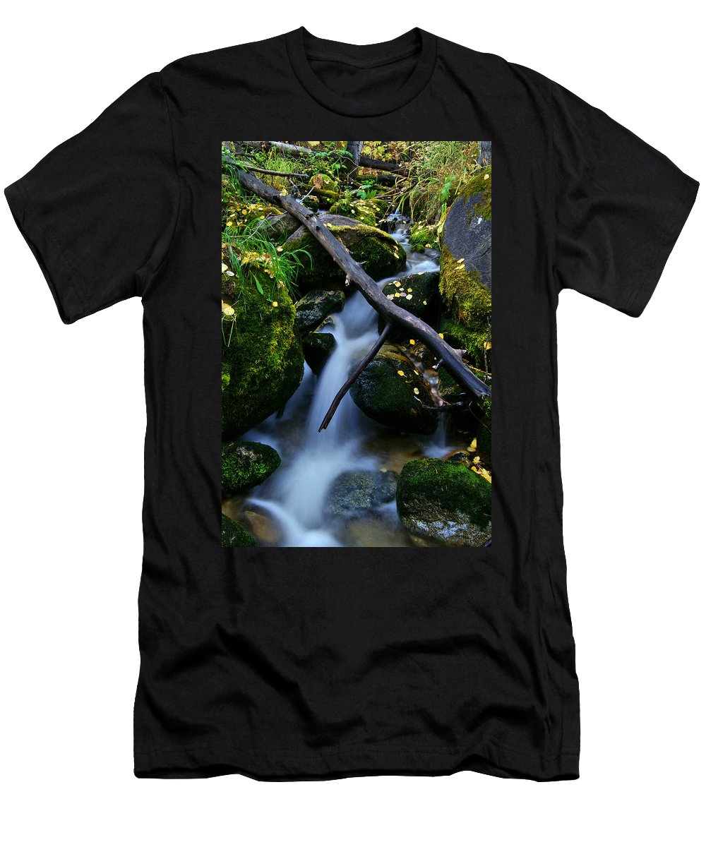 Fall Foliage Men's T-Shirt (Athletic Fit) featuring the photograph Follow Me by Jeremy Rhoades