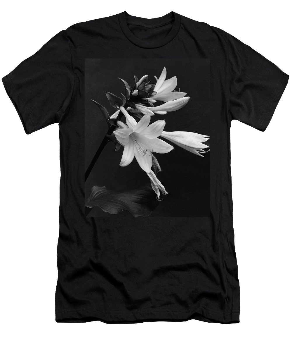 Fragrant plantain lily t shirt for sale by j horace mcfarland flowers mens t shirt athletic fit featuring the photograph fragrant plantain lily by izmirmasajfo