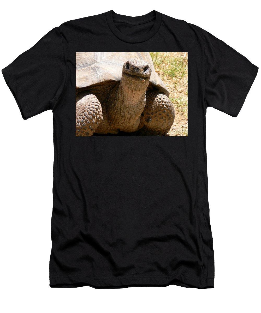Tortoise Men's T-Shirt (Athletic Fit) featuring the photograph Friendly Tortoise by Laurel Powell