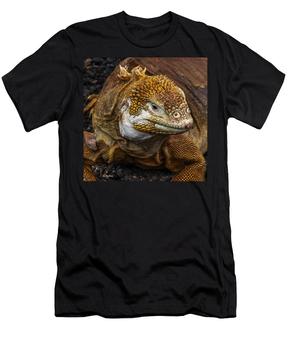 Galapagos Men's T-Shirt (Athletic Fit) featuring the photograph Galapagos Land Iguana by Allen Sheffield