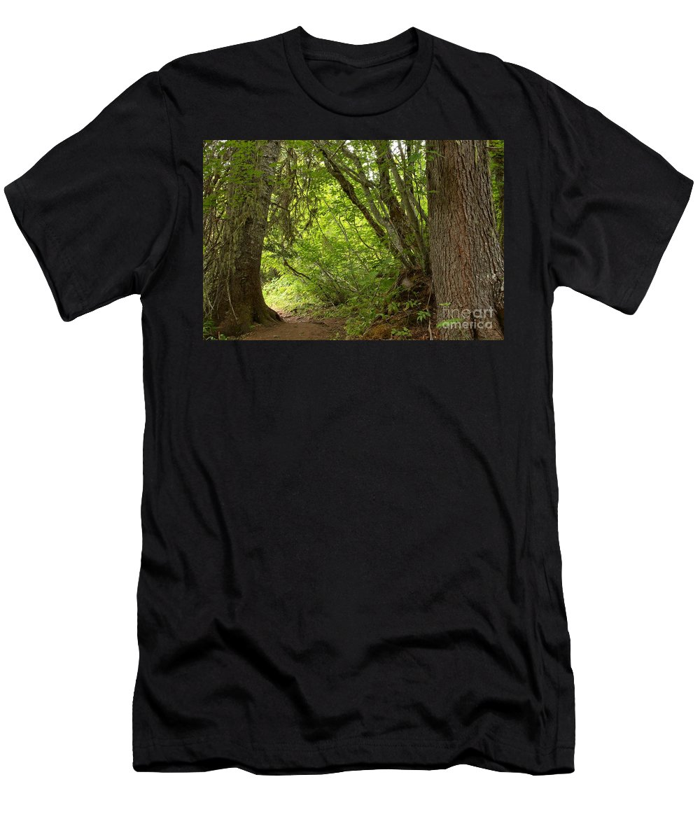 Cheakamus Rainforest Men's T-Shirt (Athletic Fit) featuring the photograph Garibaldi Old Growth Cedars by Adam Jewell