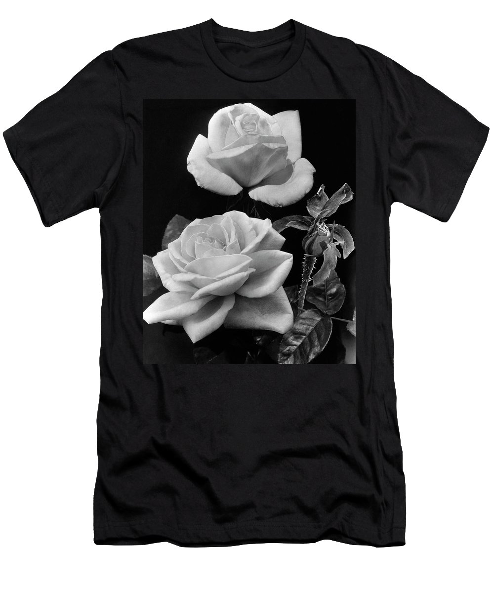 Flowers T-Shirt featuring the photograph 'george Arends' Roses by J. Horace McFarland